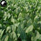Buy Spinacia Oleracea Vegetable Seeds 800pcs Plant Big Leaf Vegetable Spinacia