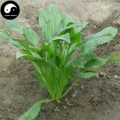 Buy Spinacia Oleracea Vegetable Seeds 800pcs Plant Small Leaf Vegetable Spinacia