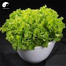 Buy Lettuce Vegetable Seeds 200pcs Plant Green Leaf Vegetable Lactuca Sativa