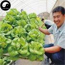 Buy Lettuce Vegetables Seeds 800pcs Plant Green Leaf Vegetable Lactuca Sativa