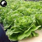 Buy Lettuce Vegetables Seeds 400pcs Plant Green Leaf Vegetable Lactuca Sativa