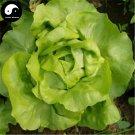 Buy Lettuce Vegetables Seeds 200pcs Plant Green Leaf Vegetable Lactuca Sativa