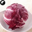Buy Ball Chicory Vegetables Seeds 150pcs Plant Cichorium Intybus Vegetable