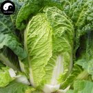 Buy Cabbage Vegetables Seeds 800pcs Plant Chinese Brassica Pekinensis