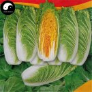 Buy Cabbage Vegetables Seeds 800pcs Plant Chinese Red Heart Brassica Pekinensis