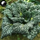 Buy Cabbage Vegetables Seeds 200pcs Plant Chinese Black Leaf Brassica Pekinensis