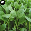Buy Nanjing Cabbage Vegetables Seeds 400pcs Plant Chinese Green Leaf Brassica Campestris