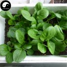 Buy Nanjing Cabbage Vegetables Seeds 200pcs Plant Chinese Green Leaf Brassica Campestris
