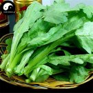 Buy Crown Daisy Vegetables Seeds 200pcs Plant Chinese Green Leaf Vegetable Tong Hao
