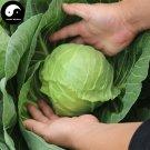 Buy Brassica Oleracea Vegetables Seeds 200pcs Plant Leaf Vegetable Cabbage