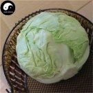 Buy Brassica Oleracea Vegetables Seeds 800pcs Plant Leaf Vegetable Cabbage