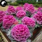 Buy Brassica Oleracea Vegetables Seeds 120pcs Plant Flower Cabbage