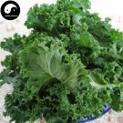 Buy Brassica Oleracea Vegetables Seeds 120pcs Plant Green Leaf Vegetable Cabbage