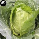 Buy Brassica Oleracea Vegetables Seeds 150pcs Plant Green Leaf Vegetable Cabbage