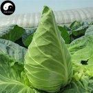 Buy Brassica Oleracea Vegetables Seeds 300pcs Plant Green Leaf Vegetable Cabbage