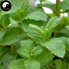 Buy Vanilla Peppermint Vegetables Seeds 600pcs Plant Leaf Nepeta Cataria