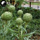 Buy Artichoke Vegetables Seeds 60pcs Plant Cynara Scolymus Vegetable Carciofo