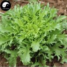Buy Cichorium Endivia Vegetables Seeds 600pcs Plant Bitter Leaf Lettuce Vegetable