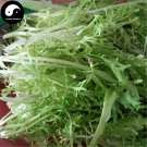 Buy Cichorium Endivia Vegetables Seeds 150pcs Plant Bitter Leaf Lettuce Vegetable