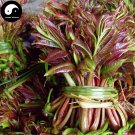 Buy Toona Sinensis Vegetables Seeds 240pcs Plant Tree Buds Vegetable