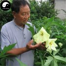 Buy Hibiseu Manihot Vegetables Seeds 120pcs Plant Hibiscus Tree Flower Vegetable Cai Fu Rong