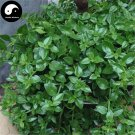 Buy Coral Dealbatus Vegetables Seeds 600pcs Plant Wild Vegetable Calcium Herb Andrographis