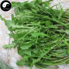 Buy Taraxacum Mongolicum Vegetables Seeds 300pcs Plant Wild Vegetable Herb Dandelion