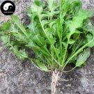 Buy Capsella Bursa-pastoris Herb Vegetables Seeds 300pcs Plant Wild Vegetable Ji Ji Cai