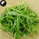 Buy Eruca Sativa Herb Vegetables Seeds 150pcs Plant Wild Vegetable Eruca Sativa