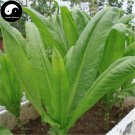 Buy Chinese Ixeris Herb Vegetables Seeds 200pcs Plant Wild Bitter Vegetable Sonchifolia