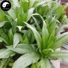 Buy Chinese Ixeris Herb Vegetables Seeds 400pcs Plant Wild Bitter Vegetable Sonchifolia