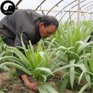 Buy Chinese Ixeris Herb Vegetables Seeds 800pcs Plant Wild Bitter Vegetable Sonchifolia