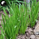Buy Garlic Chives Seeds 800pcs Plant Spices Vegetables White Root Leek