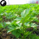 Buy Celery Seeds 200pcs Plant Spices Vegetables Apium Graveolens Qin Cai