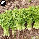 Buy Cilantro Seeds 800pcs Plant Spices Vegetables Parsley Coriandrum Sativum