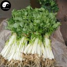 Buy White Cilantro Seeds 800pcs Plant Spices Vegetables Parsley Coriandrum Sativum