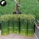 Buy Root Leek Seeds 800pcs Plant Spices Vegetables Parsley Garlic Chives