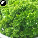 Buy Europe Celery Seeds 200pcs Plant Spices Vegetables Petroselinum Crispum