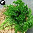 Buy Europe Celery Seeds 100pcs Plant Spices Vegetables Petroselinum Crispum