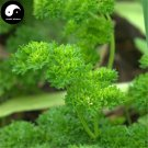 Buy Europe Celery Seeds 50pcs Plant Spices Vegetables Petroselinum Crispum