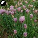 Buy Chives Seeds 100pcs Plant Spices Vegetables Allium Schoenoprasum