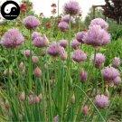 Buy Chives Seeds 400pcs Plant Spices Vegetables Allium Schoenoprasum
