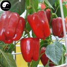 Buy Red Sweet Pepper Seeds 100pcs Plant Bell Pepper Vegetables Capsicum