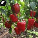 Buy Red Sweet Pepper Seeds 200pcs Plant Bell Pepper Vegetables Capsicum