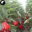 Buy Red Sweet Pepper Seeds 400pcs Plant Bell Pepper Vegetables Capsicum