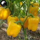 Buy Yellow Sweet Pepper Seeds 200pcs Plant Bell Pepper Vegetables Capsicum