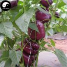 Buy Purple Sweet Pepper Seeds 400pcs Plant Bell Pepper Vegetables Capsicum