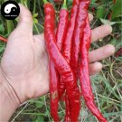 Buy Red Long Pepper Seeds 300pcs Plant Hot Chili Vegetables Capsicum