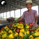 Buy Color Sweet Pepper Seeds 200pcs Plant Bell Pepper Vegetables Hot Pepper