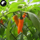 Buy Yellow Hot Chili Seeds 100pcs Plant Pepper Vegetables Super Chili